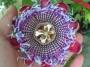 Passiflora alata / Isusova kruna